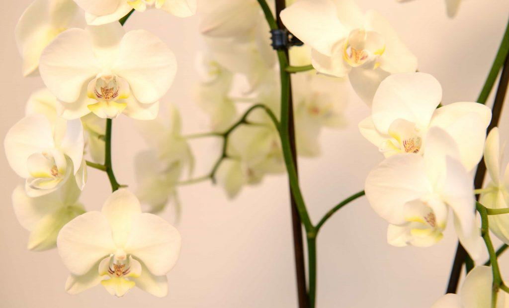 About Shaileja floral title pic